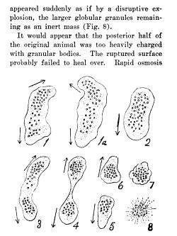 [merged small][ocr errors][ocr errors][ocr errors][ocr errors][ocr errors][ocr errors][merged small][merged small]